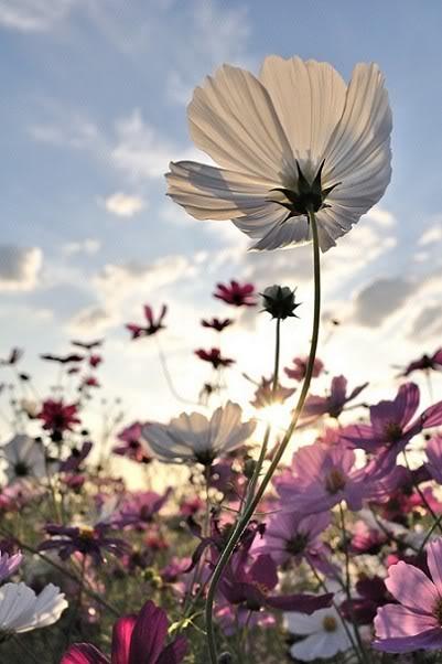 flowers-tumblr-flowers-33623947-401-602